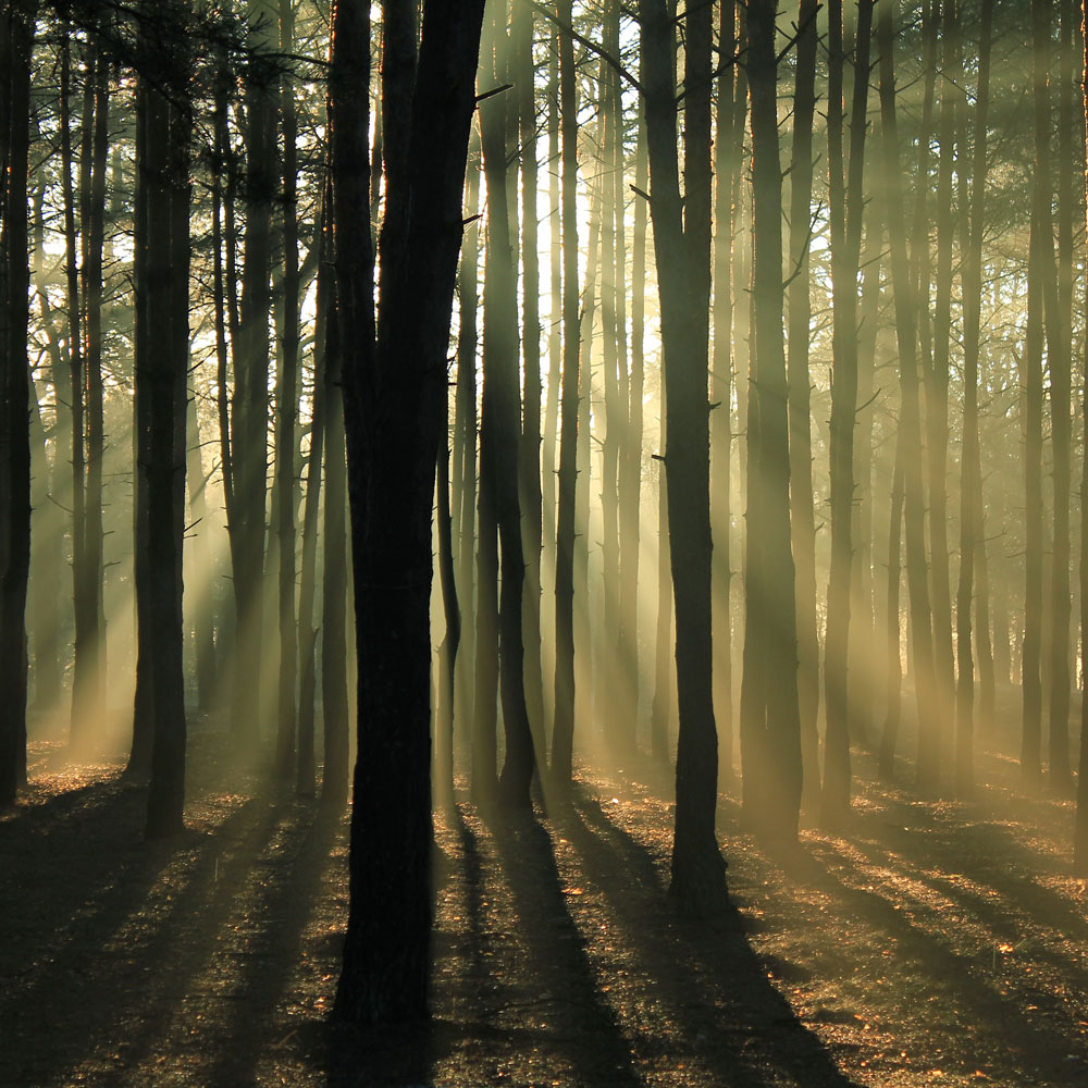 Forest with light streaming through trees